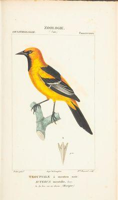 - - Atlas de zoologie : - 1844 Biodiversity Heritage Library