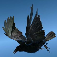 Not sure what this means but it looks really cool!! CROW - Fully Rigged For Lightwave 3D Model, I guess it's a Model Crow....WOW!! ;0)