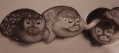 Seals chillin´ out  ;-)
