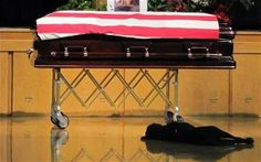 A faithful dog has refused to leave the side of his Navy SEAL owner after he was killed in Afghanistan, lying beside his master's coffin at the funeral.