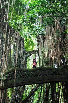 Bali Island Hopper Contiki Review