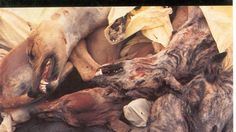 18,000 greyhounds killed each year is unacceptable. Ban greyhound racing. Ban greyhound exports.