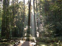 Hiking Trail, Muir Woods, CA