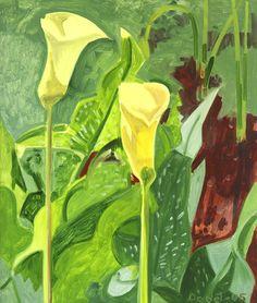 Calla Lilies, Lois Dodd, 2005