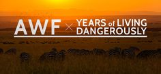 Climate change is a major threat to Africa's already endangered species. Watch AWF on Years of Living Dangerously on 11/30 to find out why.