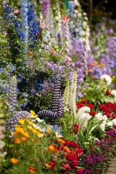 Kleurrijke bloemen tuin Door liannestift