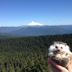 For Sierra! Biddy the Hedgehog has had a way more adventurous life than most of us :)
