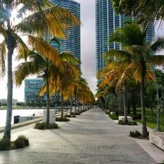Museum Park @ in Miami Two new world-class museums, of art and science, bookending an outdoor plaza with access to public transportation, and all of this will be in the middle of a verdant green waterfront park