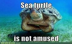 Disappointed turtle meme - photo#28