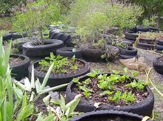 use old tires and raised planter beds, great idea