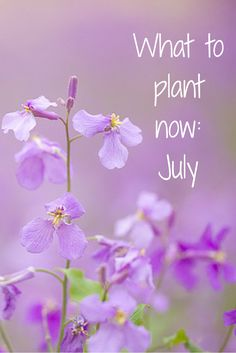 A guide to crops that you can sow in July for harvesting later on in the Summer or during the Winter months. Here's what to plant in July.