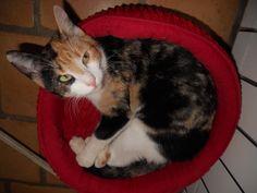 J'ai un peu grandi et je suis à l'étroit #chat #cat #chambredhote #bandb #cute #mignon #tarn #castelnaudemontmiral #gaillac http://lamaisonduchai.com/accueil.html