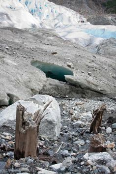 The Mendenhall Glacier's recession is unveiling the remains of ancient forests that have remained frozen beneath the ice for up to 2,350 years.