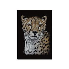"CHEETAH 3 big cat portrait guepard kitten kitty Halloween colored pencils painting Sandrine Curtiss Art ORIGINAL 5x7"" by Sandrinesgallery, $38.00 USD"