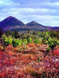 Viñas,montañas y cielo