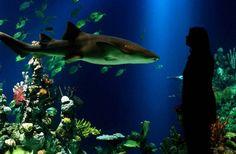 The Deep Aquarium (Acvariul Adânc), Marea Britanie The Deep Hull, East Yorkshire, Life Is Beautiful, Tours, Fish, Places, Aquariums, Animals, Happy Birthday