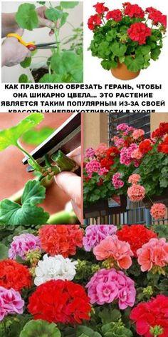 Марианна Марианночка: посты Diy Garden, Garden Design, Plants, Home Flowers, Gorgeous Gardens, Propagating Plants, Geraniums, Flowers, Farm Gardens
