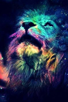 The Lion ... The univers ... The most beautiful things in the world