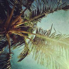 Breezy Palm