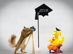 Fotos graciosas y divertidas de ardillas salvajes