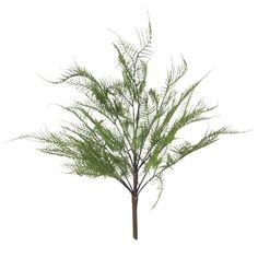 Fern Asparagus Bush Green  54cml Asparagus Fern, Ferns, Green, Plants, Fern, Flora, Plant