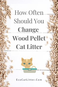 Sawdust Uses, Natural Cat Litter, Wood Cat, Wood Pellets, Edible Plants, Raw Wood, Litter Box, Recycled Materials, Types Of Wood
