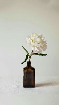 Single peony in a dark bottle