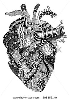anatomical heart illustration - Google Search