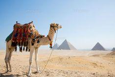 ギザのピラミッドとラクダ (c)R.CREATION/SEBUN PHOTO
