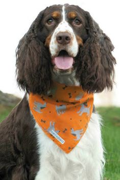 The Insect Shield Dog Insect Repellent Bandana is one of the best tick repellents for your dog. It's a must-pack for your next camping, hiking, or kayaking trip. Dog Halloween Costumes, Insect Repellent, Dog Bandana, Fleas, Kayaking, Pet Supplies, Your Dog, Insects, Hiking