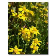 spring wildflowers back beach post card
