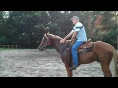 Western Pleasure Training Green Horse..  IF I ever get the guts to start training colts.