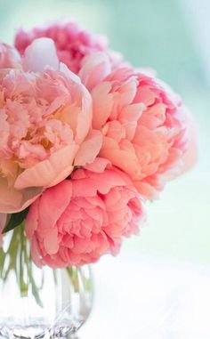 pink peonies: Jessica Holden Photography Love the background color w/ the floral colors! My Flower, Fresh Flowers, Beautiful Flowers, Pink Flowers, Flower Bomb, Peony Flower, Cactus Flower, Exotic Flowers, Yellow Roses