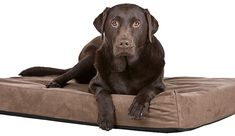 """the point they place a paw on it. Now say Paw, and simply hold your hand out flat. When your dog paws at it, say 'good."""" Reward again. You can now incorporate holding their paw Big Dog Beds, Cool Dog Beds, Big Dogs, Large Dogs, Teach Dog Tricks, Orthopedic Dog Bed, Large Dog Breeds, Dog Hacks, Pet Life"""