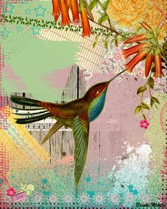Joy Bird | Flickr - Photo Sharing!