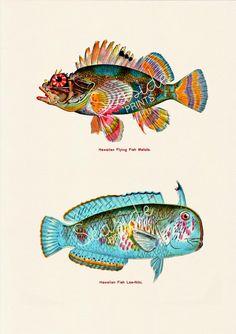 Bathroom Wall decor Vintage hawaian fishes no.02 by seasideprints