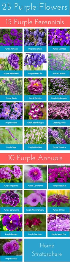25 purple flowers chart: 15 perennials and 10 annuals.  Gorgeous.