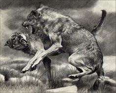 Wolf Fight by nikkiburr on DeviantArt