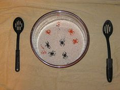 Spiders in Rice- great activity for fine motor skills