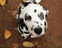 INSTANT REPLAY | Dalmatians, The Royal Baby, Music, & an unforgettable Craigslist Ad