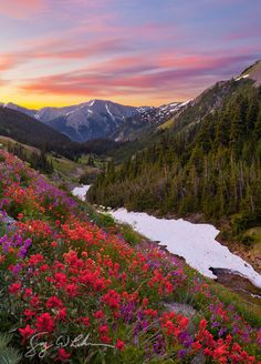 Badger Valley Wildflowers by Gary Luhm on 500px