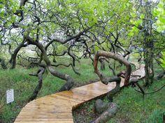 Crooked Trees, Speers SK