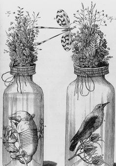 verdantdruid: marsiouxpial: by Frederik Ruysch (via cocoroachchanel) Mushroom Drawing, Learn To Code, Business Look, Cute Creatures, Sacred Geometry, Natural History, Mason Jars, How To Memorize Things, Dioramas