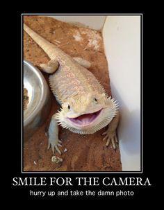 bearded-dragon-smile