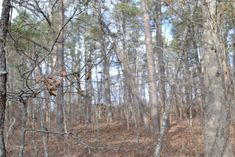 Hunting Land for Sale in the Ozarks! 80 Acres all wooded! Marketable and good young timber - large pines and hardwoods, abundance of wildlife! This property would be well suited for hunting, investment or building! Highway frontage. This property is located in Douglas County, on County Road C, Ava, Missouri. It is very near Bryant Creek, Vera Cruz and Assumption Abby Monastery.