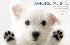 Корейские бренды, которые не тестируют свою продукцию на животных