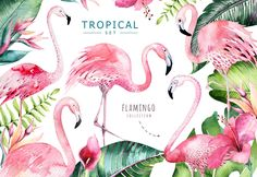 """Check out this @Behance project: """"Tropical set II. Flamingo collection"""" https://www.behance.net/gallery/53453069/Tropical-set-II-Flamingo-collection"""