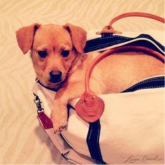 travel buddy! #puppy