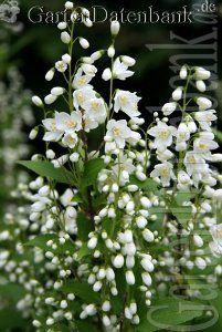 White Flowers, Beautiful Flowers, White Plants, White Gardens, Dream Garden, Garden Landscaping, Planting Flowers, Landscape, White Things