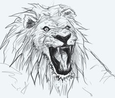 how to draw a lion in 13 steps | How to draw | Pinterest | Drawing ...